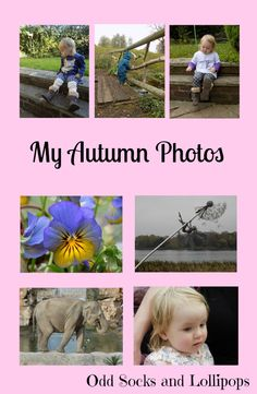 My Autumn Photos - sharing some of my favourite photos which I have taken this autumn