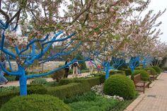 tree trunks painted blue, Kauffman Memorial Garden, Kansas City, MO