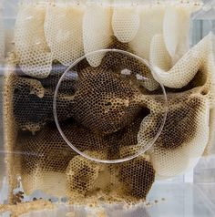 Artist Uses Bees to Build Honeycomb Sculptures