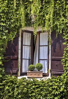 Ivy framing the window