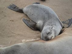 Seal Wars: The world's largest and cruelest marine mammal slaughter of 85,000 still-nursing baby seal pups begins... https://vimeo.com/42307822 @sea Shepherd Conservation Society #defendconserveprotect