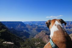 6 most pet-friendly state parks. Photo: (Flickr | fPat Murray) #stateparks #petfriendly