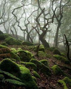 Dark forest, England
