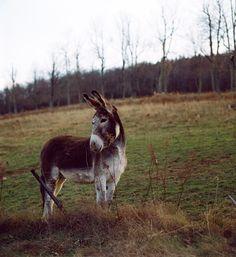Sweetest donkey, G R A S S D O E