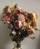 Vase of dead roses