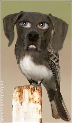 Mutt 'n' bird