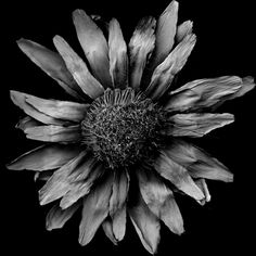 #macrophotography BY Tomoya Matsuura - #Macrofotografia por Tomoya Matsuura #Photography #Fotografia #bw #BlackAndWhite #BN #BlancoyNegro #Dead #Nature