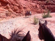 We are the premier riding program in the Southwest. We offer rides along the Rio