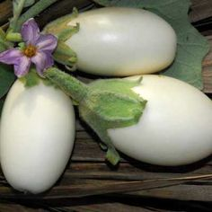 Japanese White Eggplant 25 seeds small sweet and by SmartSeeds