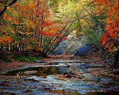 Autumn At Its Best by Robert Harmon