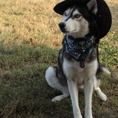 Sheriff's back in town. You can now sleep safe🔫 Sheriff, Husky, Sleep, Canning, Adventure, Dogs, Animals, Instagram, Animaux