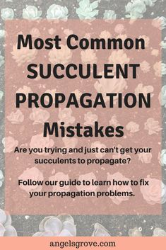 Most Common Succulent Propagation Mistakes. Are you struggling with propagation? Learn Tips from a Pro. Learn to make hundreds of succulents in a couple of months with propagation! Indoor Vegetable Gardening, Vegetable Garden For Beginners, Succulent Gardening, Succulent Terrarium, Gardening For Beginners, Gardening Tips, Succulent Plants, Cacti, Organic Gardening