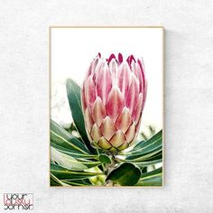 Shop King Protea Pink Poster Print created by FunkyPixel. Botanical Flowers, Botanical Prints, Pink Flowers, Botanical Posters, Wall Art Prints, Poster Prints, Protea Flower, Sharp Prints, Tropical Art