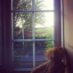 #Bear-in-Puddletown