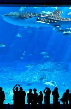 Okinawa Churaumi Aquarium, Okinawa, Japan
