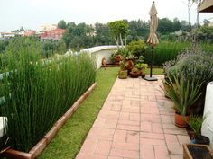 Azoteas verdes Outdoor Spaces, Outdoor Decor, Rooftop, Sidewalk, Backyard, Landscape, Awesome, Outdoors, Home Decor