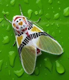 A colourful moth. Beautiful.