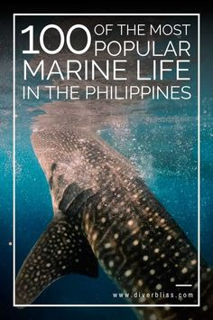 Marine Life in the Philippines | Sea Creatures in the Philippines | Critters in the Philippines, Reef Fishes in the Philippines | Saltwater Fish | Marine Animals | Marine Species | Fish ID Marine Fishes, Colorful Reef Fish, Indo-Pacific Reef Fish | Coral Triangle Species | Endemic Marine Animals in the Philippines, Sea Animals found in the Philippines | Marine biodiversity #marinelife #philippines #seacreatures #oceanlife #marinespecies #fishidentification