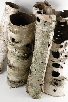 Birch Bark Tubes 16in  - put around the bottom of the stand for the fake christmas tree?