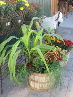 Use two of these baskets in the garden with hay and pumpkins