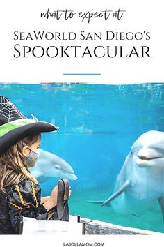 Spooktacular is SeaWorld San Diego's Halloween celebration. This year, expect dance parties, parades, decorations, fall menus, and more. Get all the details here at La Jolla Mom La Jolla San Diego, San Diego Zoo, Halloween Celebration, Halloween Themes, Fall Menus, Dance Parties, San Diego Vacation, Flying With Kids, Family Vacation Destinations