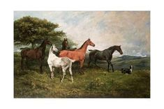 Mares and Foal with a Sheepdog Giclee Print by John Emms at Art.com