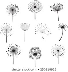 Find Floral Elements for design, dandelions. Vector illustration Stock Images in HD and millions of other royalty-free stock photos, illustrations, and vectors in the Shutterstock collection. Dandelion Drawing, Dandelion Clock, Flower Doodles, Doodle Drawings, Clipart, Art Sketches, Painted Rocks, Flower Art, Line Art