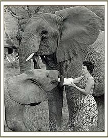Dame Daphne Sheldrick has devoted her life to raising and rehabilitating orphan elephants into the wild in Kenya thru the David Sheldrick Wildlife Trust. The orphans are gradually reintegrated back into the wild. She's helped to set up similar programs throughout Africa and SE Asia & she tirelessly campaigns against the abuse of captive animals and against poaching.