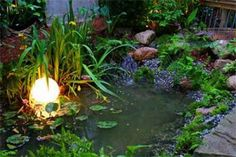 1000 Images About Goldfish Pond On Pinterest Goldfish Pond Ponds And Koi Ponds