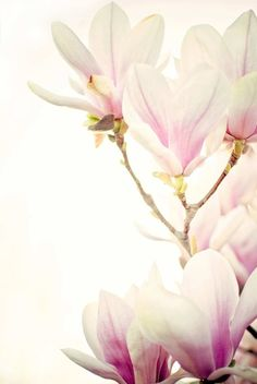 Pretty In Pink Floral Photograph