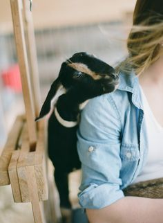 Goat. Photography: White Loft Studio - www.whiteloftstudio.com  Read More: http://www.stylemepretty.com/living/2014/08/13/behind-the-scenes-dancing-goats-dairy/
