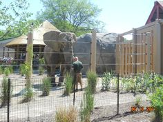 Visiting our elephants in Cleveland Metroparks Zoo