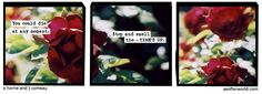 A Softer World: now you will never know
