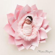 baby pictures newborn photography photographer frisco texas. martie hampton photography paper flower