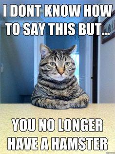 cat humor is great!