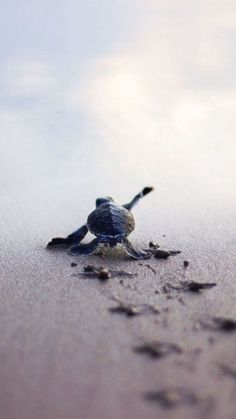 Baby Turtle by Jessica Blain-Lewis on 500px