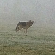 Foggy Morning...My Handsome Blitz