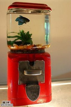 Old gumball machine = new aquarium! I have a gumball machine and it will = aquarium Aquarium Design, Aquarium Ideas, Diy Aquarium, Aquarium Cake, Diys, Do It Yourself Inspiration, Do It Yourself Furniture, Diy Furniture, Repurposed Furniture