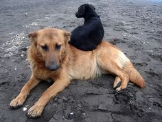 Perros Callejeros!!
