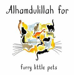 Alhamdulillah for furry little pets (cats). Islamic Qoutes, Muslim Quotes, Religious Quotes, God In Arabic, Alhumdulillah Quotes, I Muslim, Alhamdulillah For Everything, Islam Women, Islam For Kids