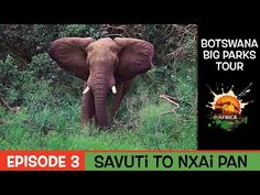 Botswana Big Parks Tour - (Savuti to Nxai Pan Episode Rest Days, Episode 3, Parks, My Life, Elephant, Africa, Tours, Big, Youtube