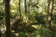 Elevated wood boardwalk, Rainforest Trail, Pacific Rim National Park, Vancouver Island | Flickr - Photo Sharing!