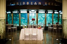 A reception in an aquarium? Yes please! Wasio Photography