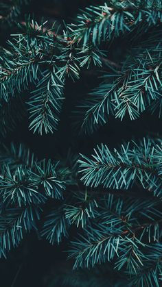 Enjoy 35 Christmas iPhone Wallpapers by Preppy Wallpaper Wallpaper Natal, Wallpaper S, Wallpaper Backgrounds, Iphone Wallpapers, Winter Iphone Wallpaper, New Year Wallpaper, Painting Wallpaper, Iphone Backgrounds, Iphone Wallpaper Trees