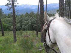 En el silencio del pinar los paisajes se disfrutan más