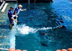 Feeding the fish at the #quicksilver #greatbarrierreef platform. @lauren.petroff @davidapetroff @marleepetroff a cruise in the semisubmersible. #petroffsaroundtheworld #natgeoexpedition by lealeapet http://ift.tt/1UokkV2