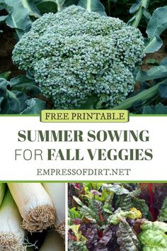 A sowing plan for growing veggies and herbs in the fall garden. Be sure to start your seeds in mid to late summer. #vegetablegardening #fallgardeningtasks #empressofdirt