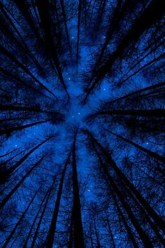 infiniteoneness:    Forest Sky at Night | by dylanarnallt.