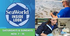 SeaWorld Orlando has announced the return of Inside Look this fall, now with limited capacity to promote physical distancing: Shark Habitat, Harbor Seal, Seaworld Orlando, Fish House, Killer Whales, Sea World, Otters, Pet Care, Dolphins