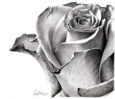 beautiful pencil sketch